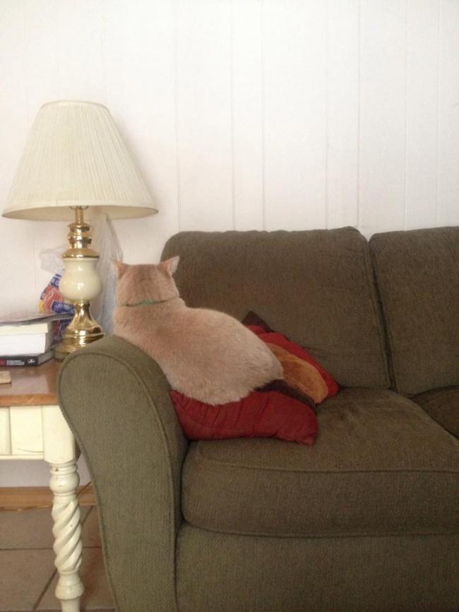 Pisici magnifice, in poze adorabile - Poza 10