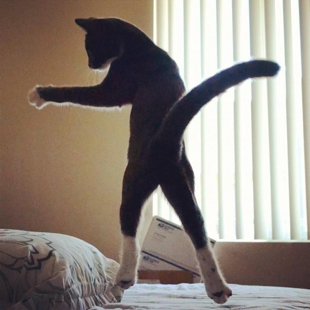 Dans si veselie: Animale haioase, in ipostaze unice - Poza 9