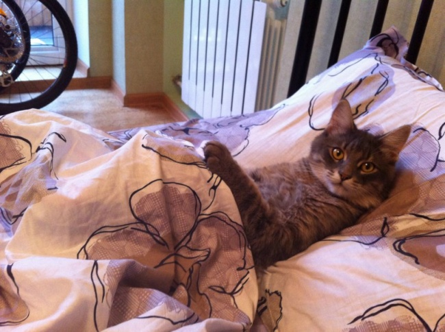 Pisici magnifice, in poze adorabile - Poza 11
