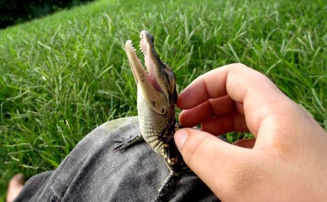 Pui simpatici de animale, in poze adorabile - Poza 10