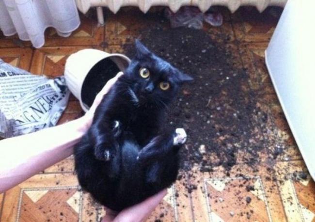 Pisici magnifice, in poze adorabile - Poza 13