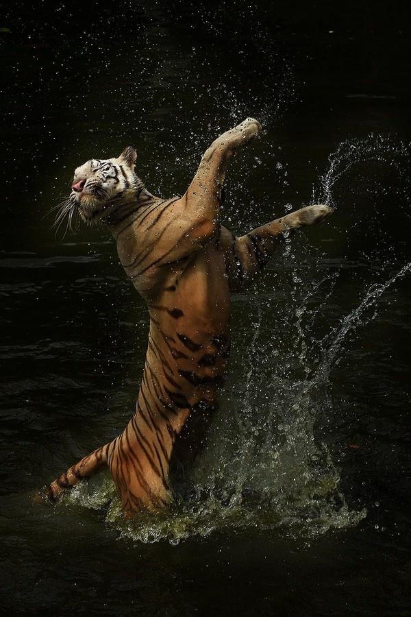 Dans si veselie: Animale haioase, in ipostaze unice - Poza 12