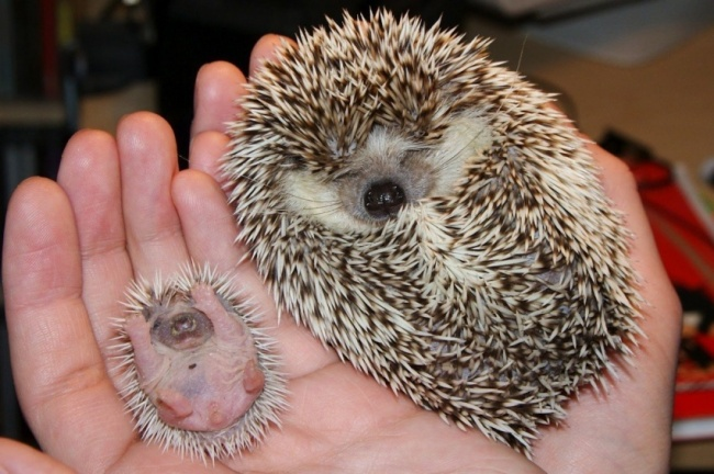 Pui simpatici de animale, in poze adorabile - Poza 14