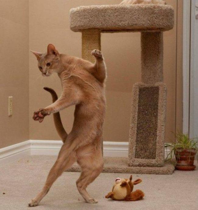 Pisici magnifice, in poze adorabile - Poza 18