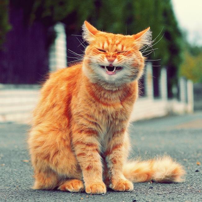 Pisici magnifice, in poze adorabile - Poza 19
