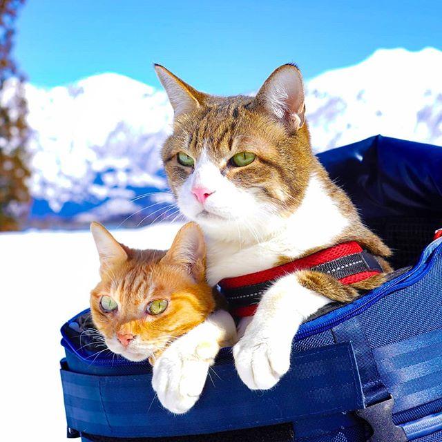 Jurnalul de calatorie al pisicilor plimbarete, in poze adorabile - Poza 1
