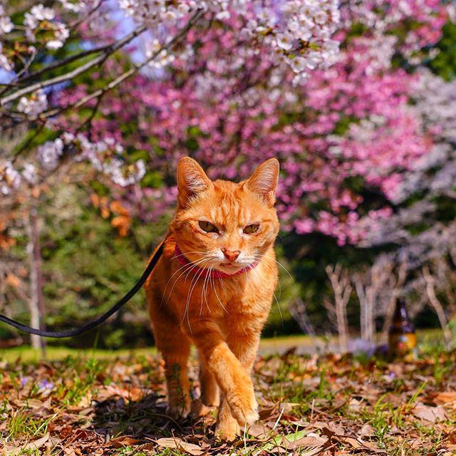 Jurnalul de calatorie al pisicilor plimbarete, in poze adorabile - Poza 2