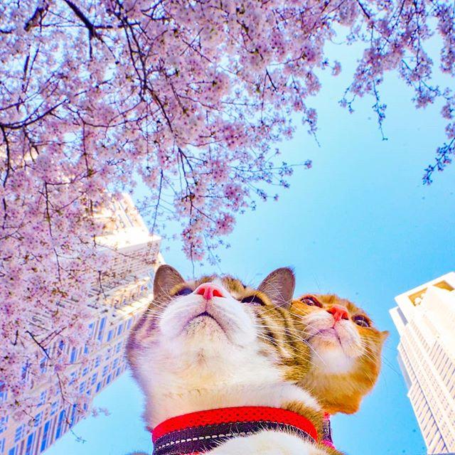 Jurnalul de calatorie al pisicilor plimbarete, in poze adorabile - Poza 3