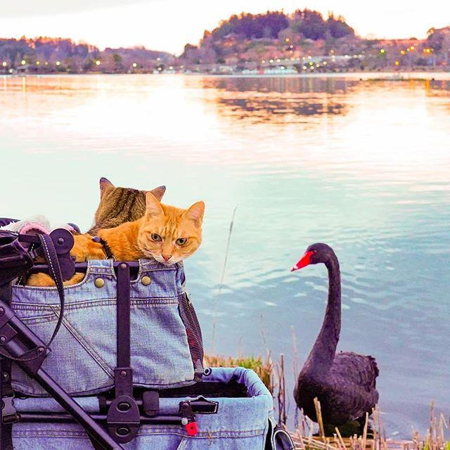 Jurnalul de calatorie al pisicilor plimbarete, in poze adorabile - Poza 5