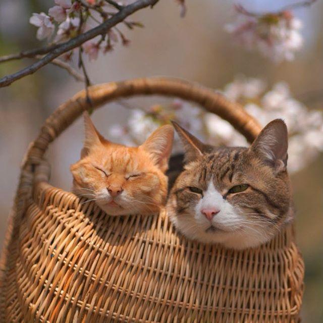 Jurnalul de calatorie al pisicilor plimbarete, in poze adorabile - Poza 6