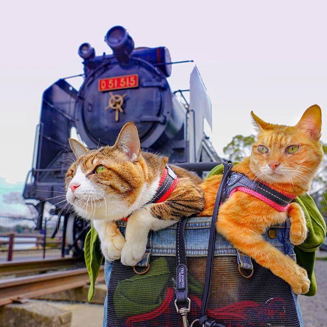 Jurnalul de calatorie al pisicilor plimbarete, in poze adorabile - Poza 8