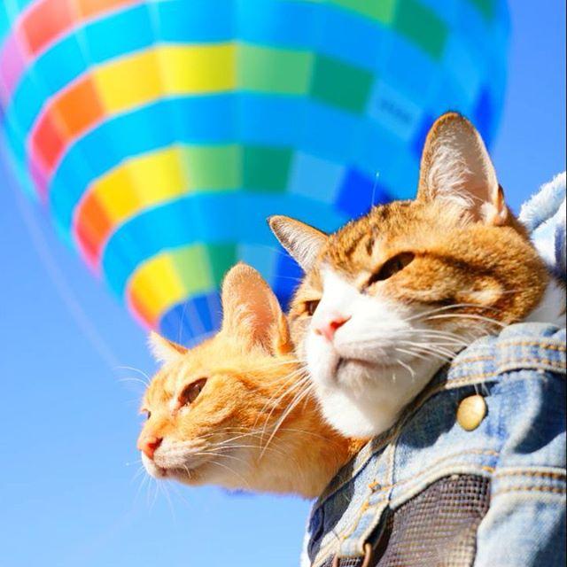 Jurnalul de calatorie al pisicilor plimbarete, in poze adorabile - Poza 9