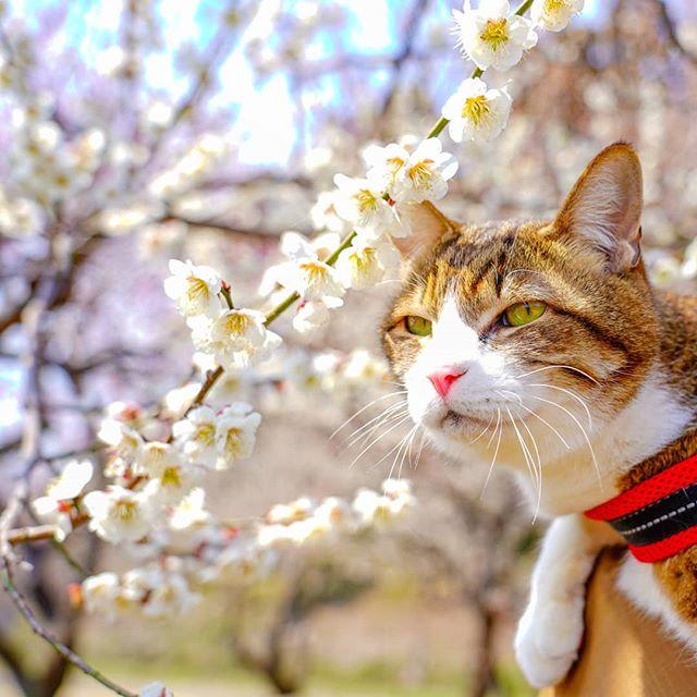 Jurnalul de calatorie al pisicilor plimbarete, in poze adorabile - Poza 10