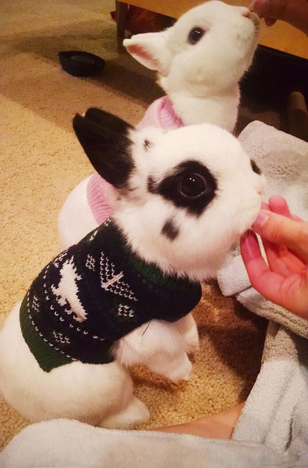 Animalute dragalase pregatite pentru iarna - Poza 6