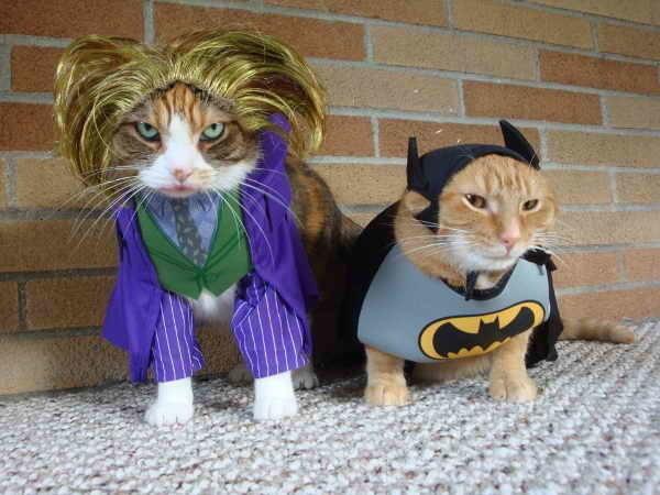 20+ Pisici costumate de Halloween, in poze hilare - Poza 7
