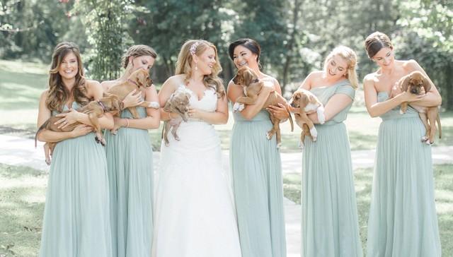 Cum arata imaginile de la nunta unui cuplu iubitor de animale? - Poza 1