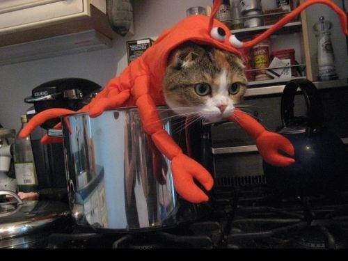 20+ Pisici costumate de Halloween, in poze hilare - Poza 8