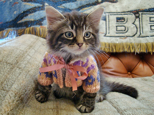 Animalute dragalase pregatite pentru iarna - Poza 8