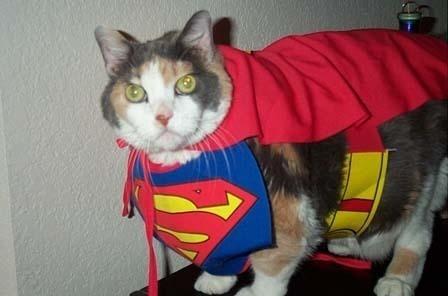 20+ Pisici costumate de Halloween, in poze hilare - Poza 9
