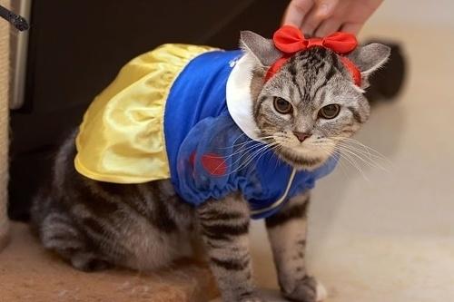 20+ Pisici costumate de Halloween, in poze hilare - Poza 10