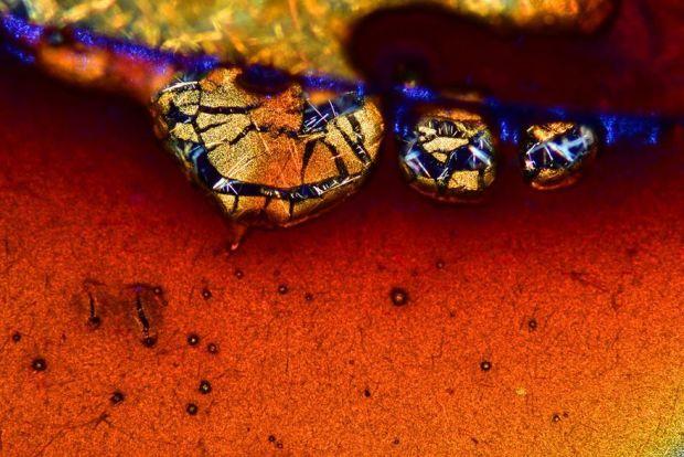 Lumea insesizabila cu ochiul liber, in fotografii macro - Poza 9