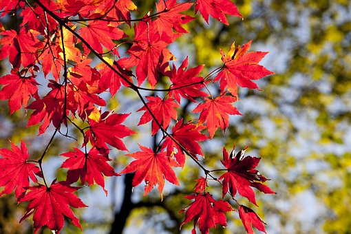 O reverenta, frunza... Cele mai frumoase poezii de toamna - Poza 1