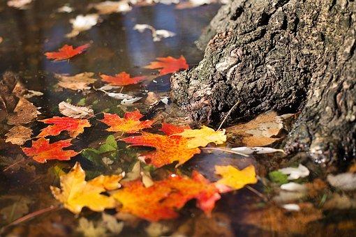 O reverenta, frunza... Cele mai frumoase poezii de toamna - Poza 8
