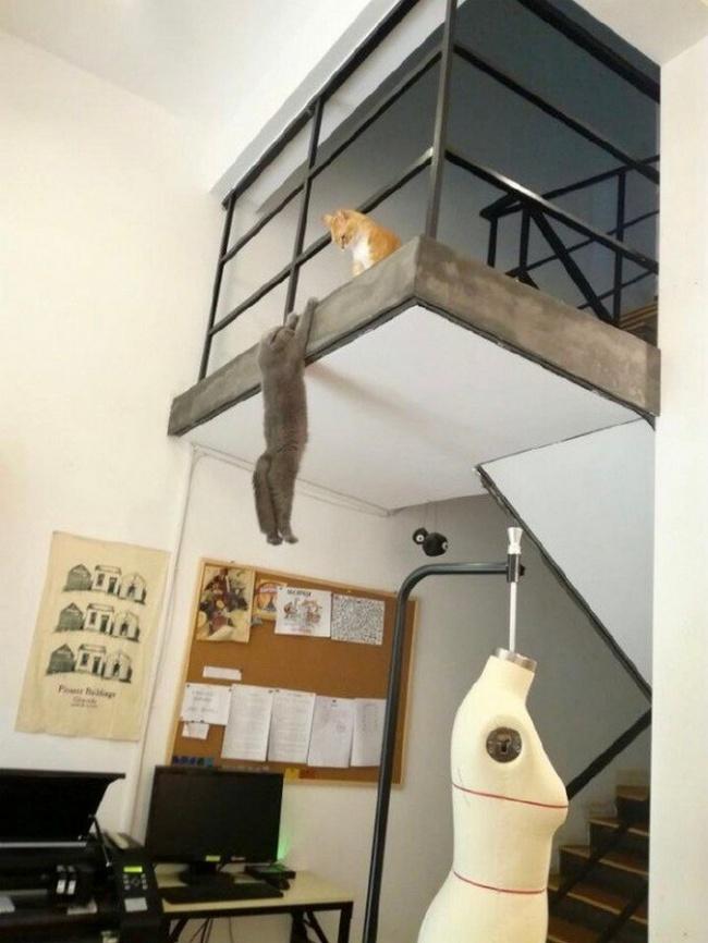 Viata secreta a animalelor de companie, in poze amuzante - Poza 14