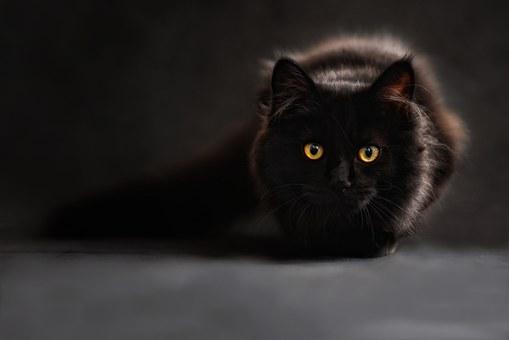 20+ Lucruri pe care nu le stiai despre pisica ta - Poza 1
