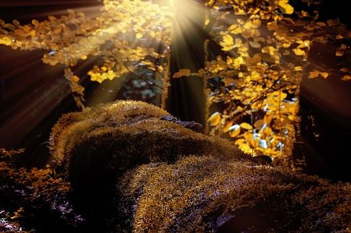 O reverenta, frunza... Cele mai frumoase poezii de toamna - Poza 2