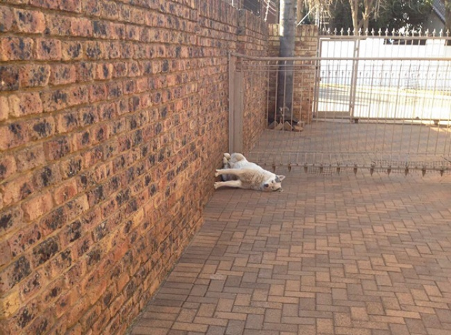 Viata secreta a animalelor de companie, in poze amuzante - Poza 3