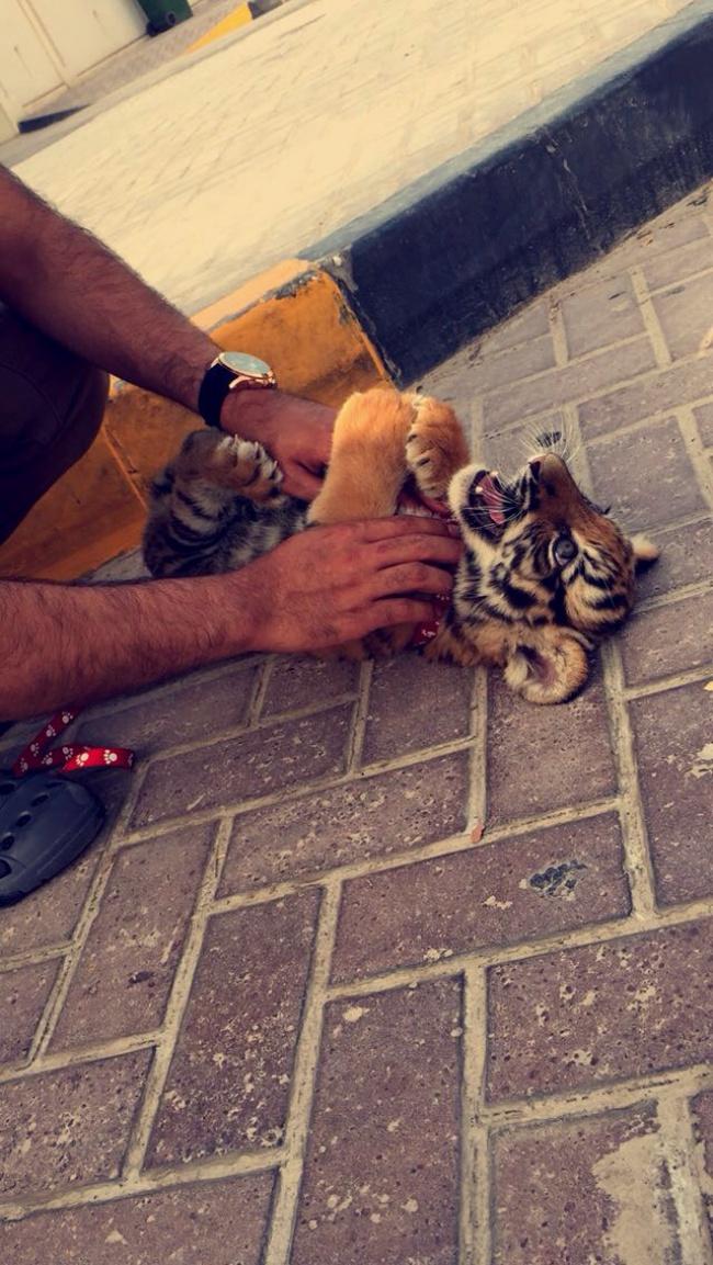 Viata scandalos de luxoasa din Dubai, in poze - Poza 4