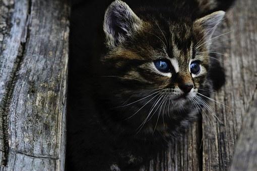 20+ Lucruri pe care nu le stiai despre pisica ta - Poza 3
