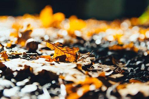 O reverenta, frunza... Cele mai frumoase poezii de toamna - Poza 4