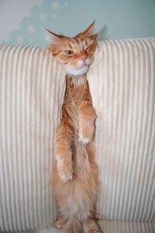 Viata secreta a animalelor de companie, in poze amuzante - Poza 5