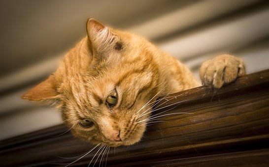 20+ Lucruri pe care nu le stiai despre pisica ta - Poza 4