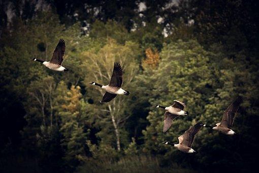 O reverenta, frunza... Cele mai frumoase poezii de toamna - Poza 6