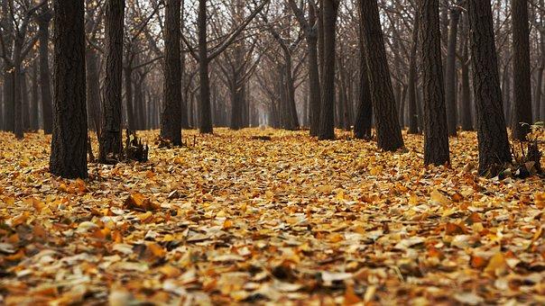 O reverenta, frunza... Cele mai frumoase poezii de toamna - Poza 9