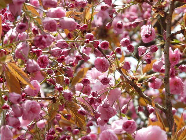 Splendoarea copacilor infloriti in poze superbe - Poza 10