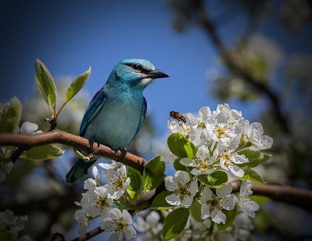Splendoarea copacilor infloriti in poze superbe - Poza 14