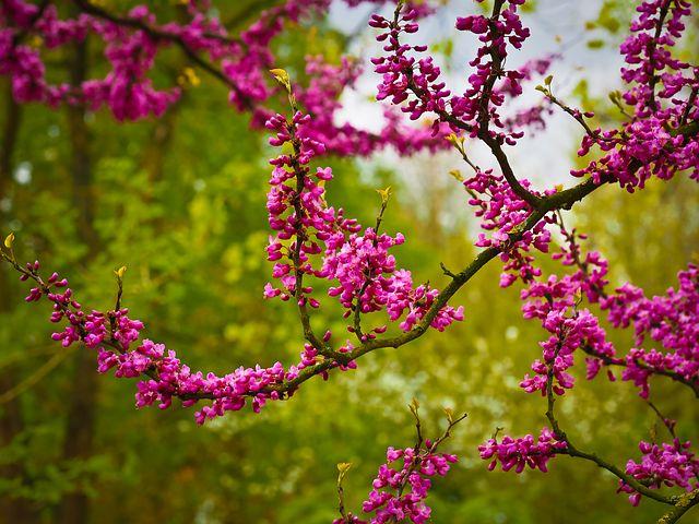 Splendoarea copacilor infloriti in poze superbe - Poza 19