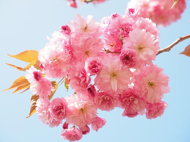 Splendoarea copacilor infloriti in poze superbe - Poza 5
