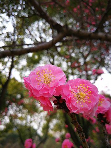 Splendoarea copacilor infloriti in poze superbe - Poza 8