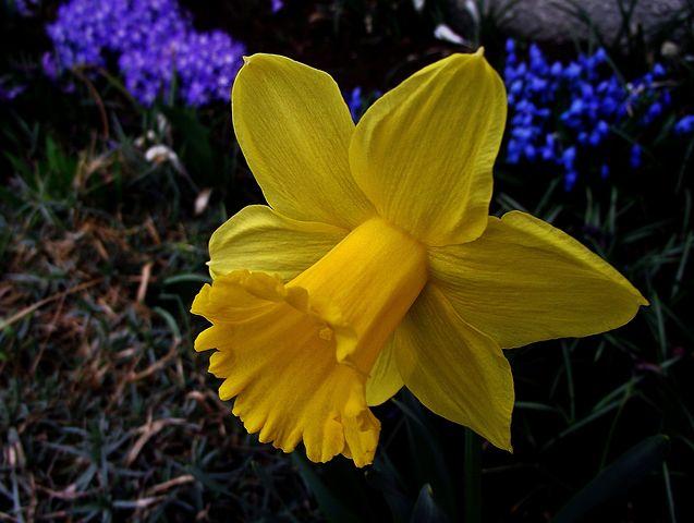 Gingasia florilor de primavara in poze superbe - Poza 20