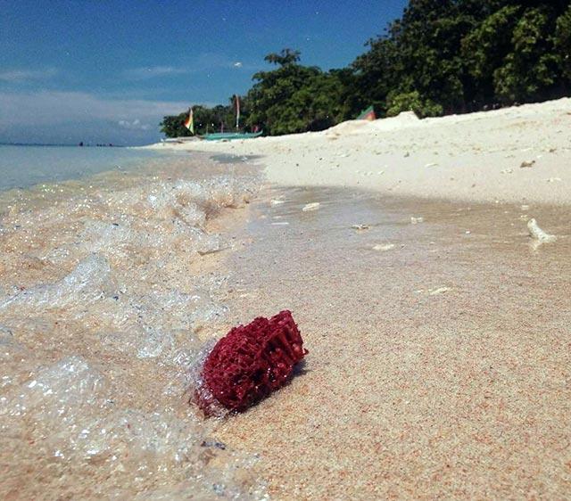 Cum arata cea mai frumoasa plaja cu nisip roz - Poza 2