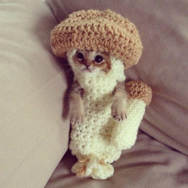 Cele mai dragute pisici din lume, in poze adorabile - Poza 1