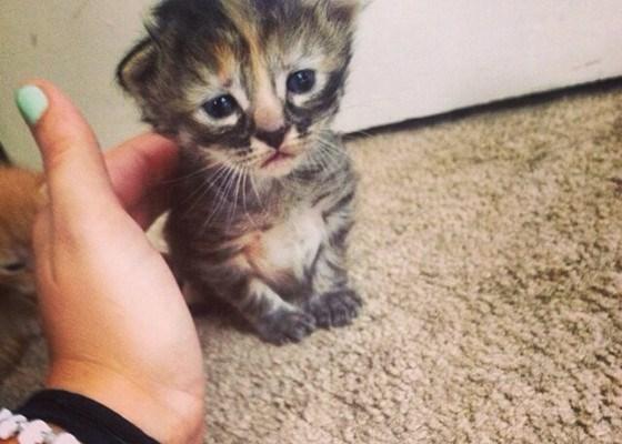 Cele mai dragute pisici din lume, in poze adorabile - Poza 12