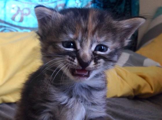 Cele mai dragute pisici din lume, in poze adorabile - Poza 13