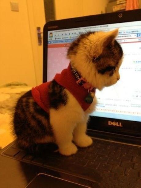 Cele mai dragute pisici din lume, in poze adorabile - Poza 17