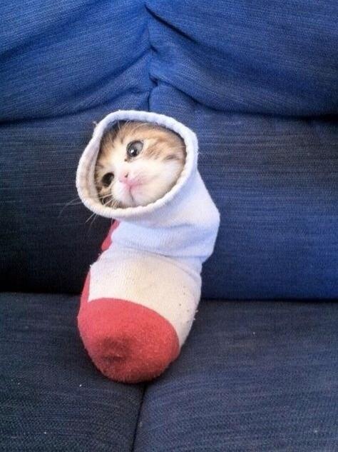 Cele mai dragute pisici din lume, in poze adorabile - Poza 2